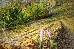 Azienda Agricola Biologica Il Ciabot
